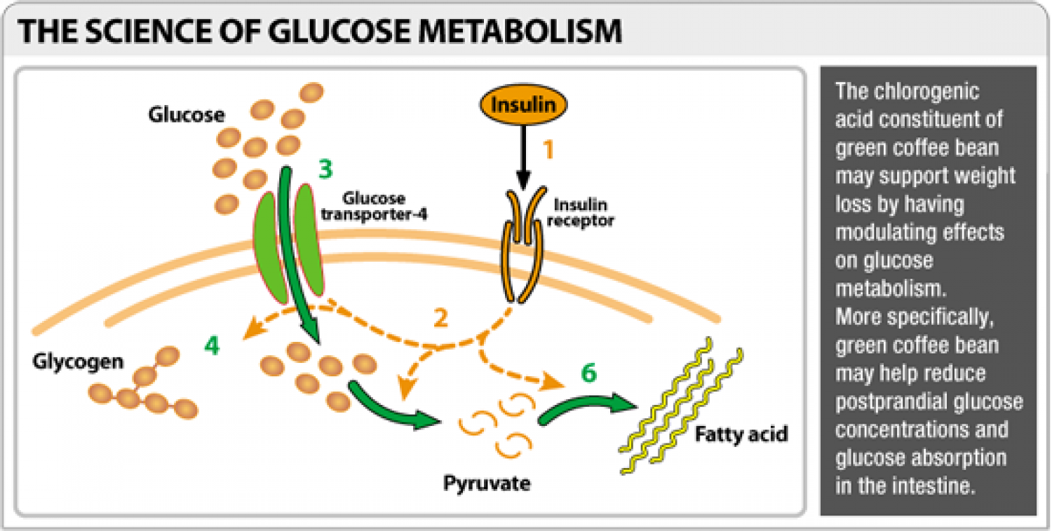 The Science of Glucose Metabolism Infographic