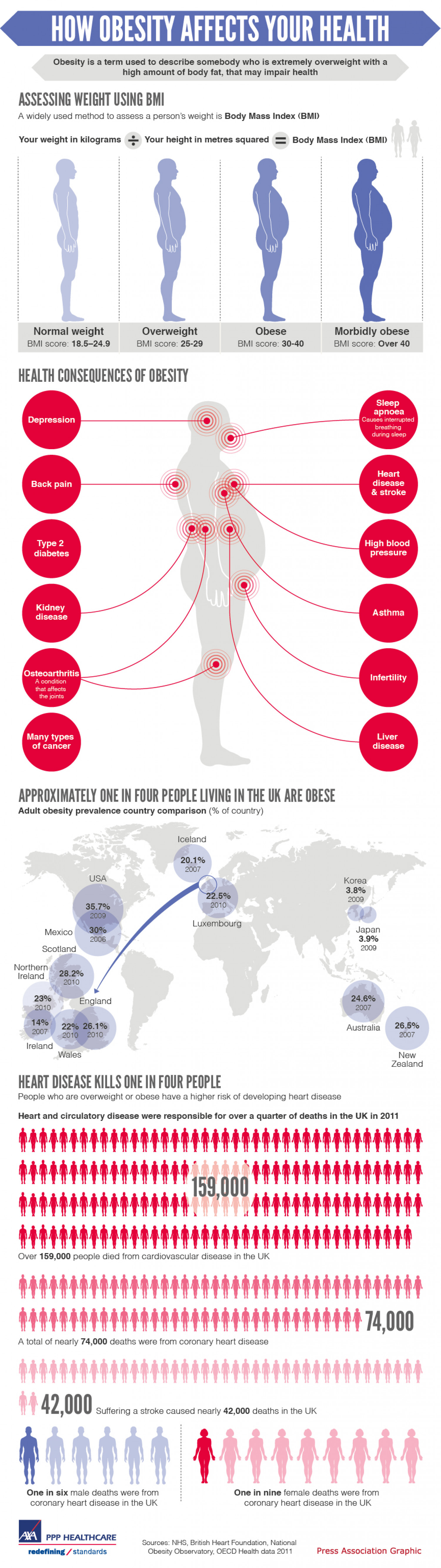How Obesity Affects Your Health Infographic