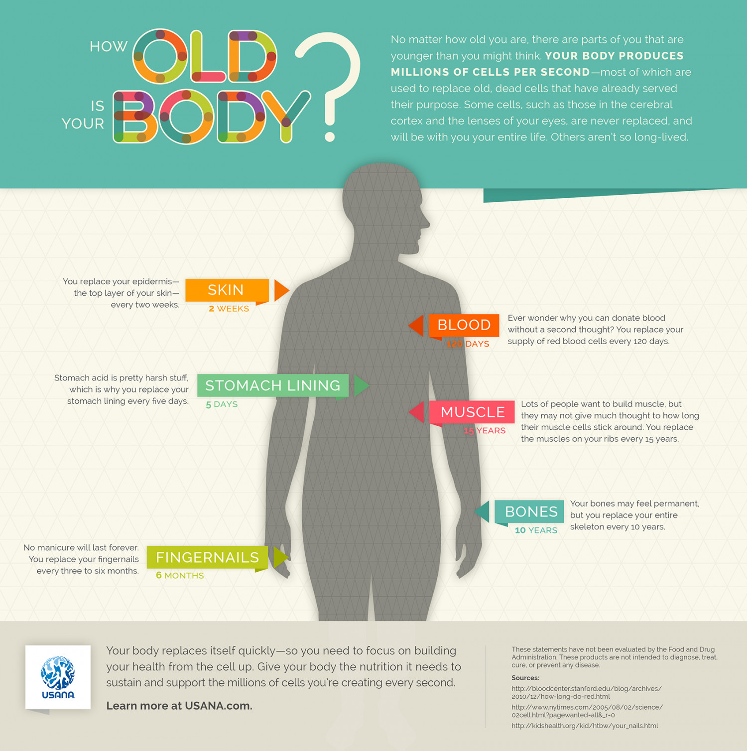 How Old is Your Body? Infographic
