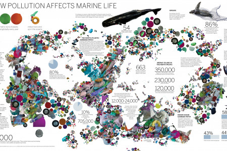 How Pollution Affects Marine Life Infographic