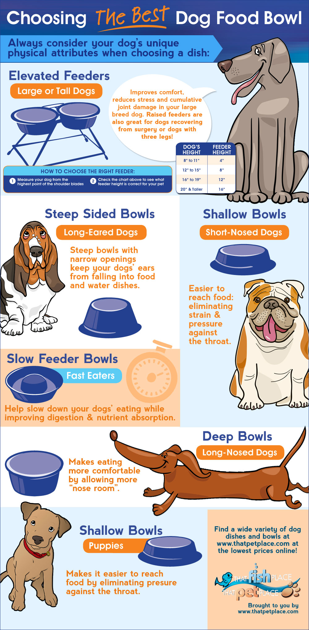 Choosing The Best Dog Food Bowl [Infographic]
