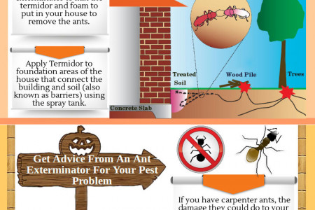 How To Get Rid of Carpenter Ants Infographic