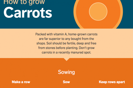 How to Grow Carrots Infographic