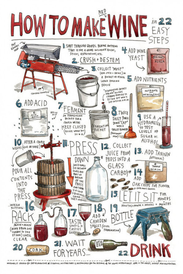 How to Make Wine in 22 easy steps Infographic