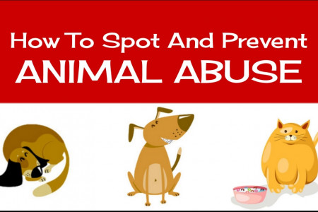 How To Spot And Prevent Animal Abuse Infographic