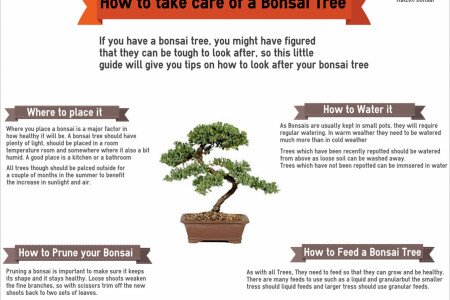 How to take care of a Bonsai Tree Infographic