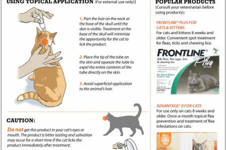 How to treat your pet. Infographic
