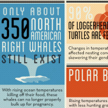 How We're Endangering Species Infographic