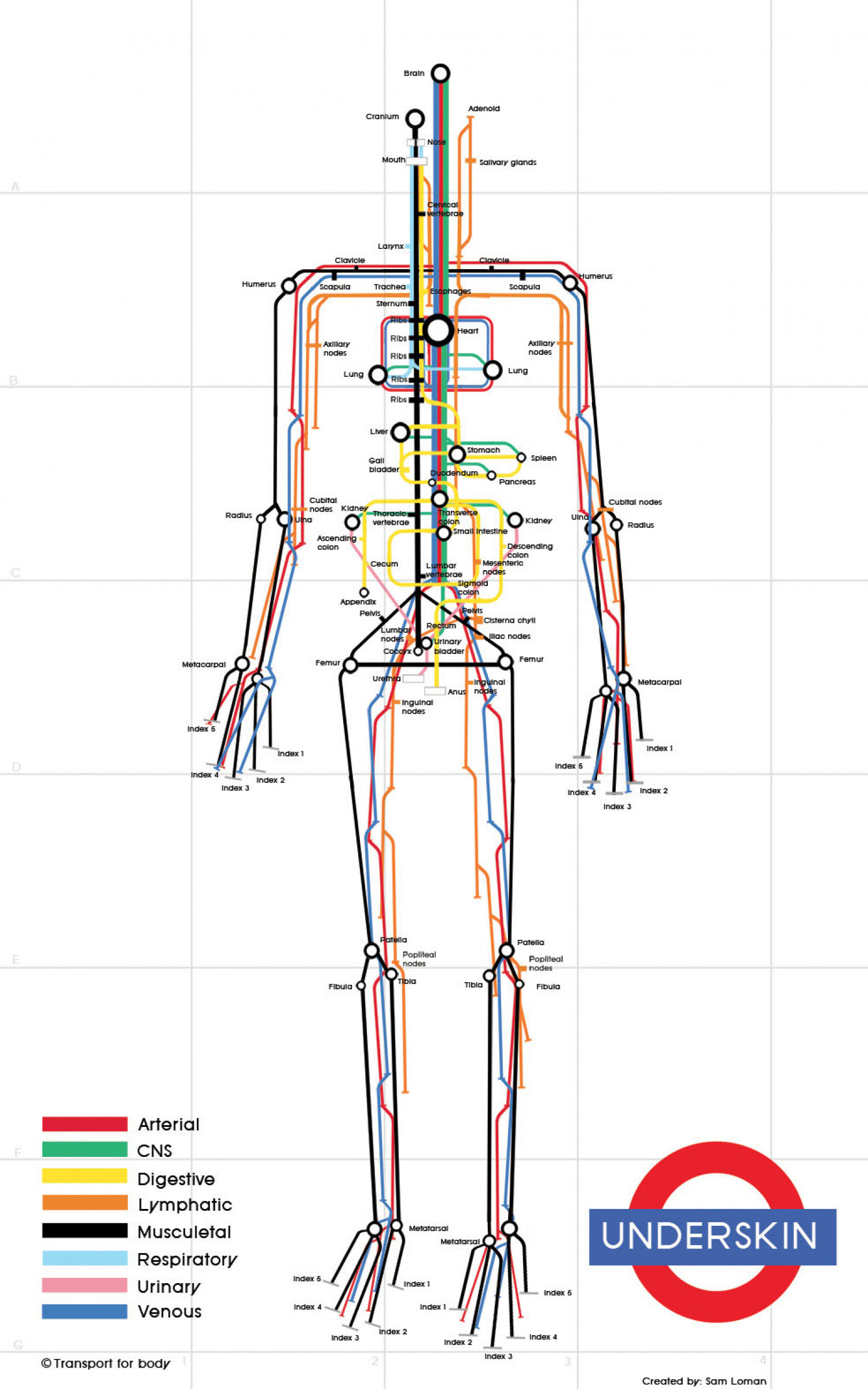 Human Body Subway Map Infographic