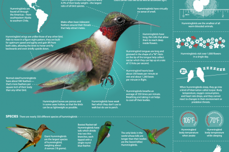 Hummingbirds: Magic in the Air Infographic
