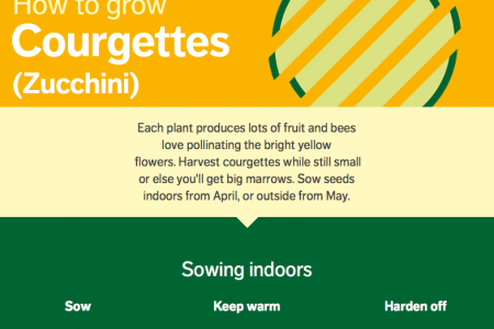 How to Grow Courgettes (Zucchini)  Infographic