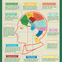 Inside the Entrepreneur's Brain Infographic