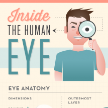 Inside The Human Eye Infographic