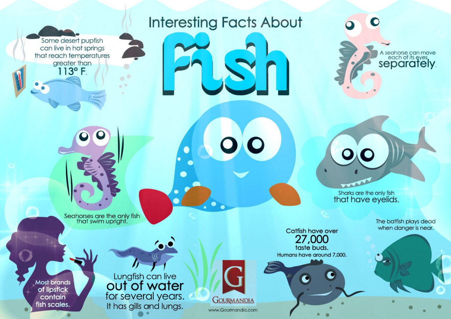 interesting facts about fish ForInteresting Facts About Fish