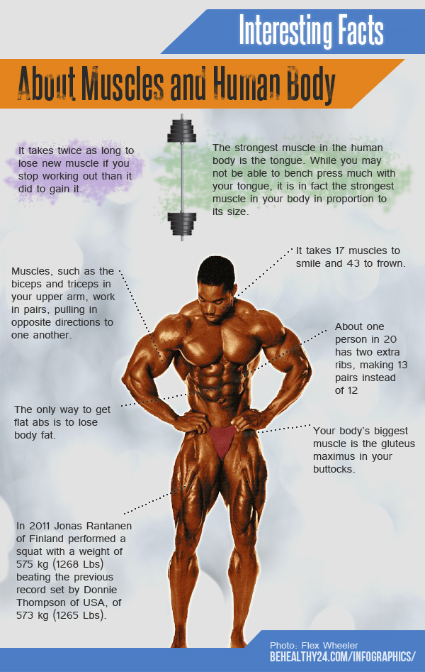 Interesting Facts About Muscle and Human Body | Visual.ly