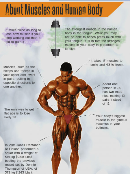 Interesting Facts About Muscle and Human Body Infographic