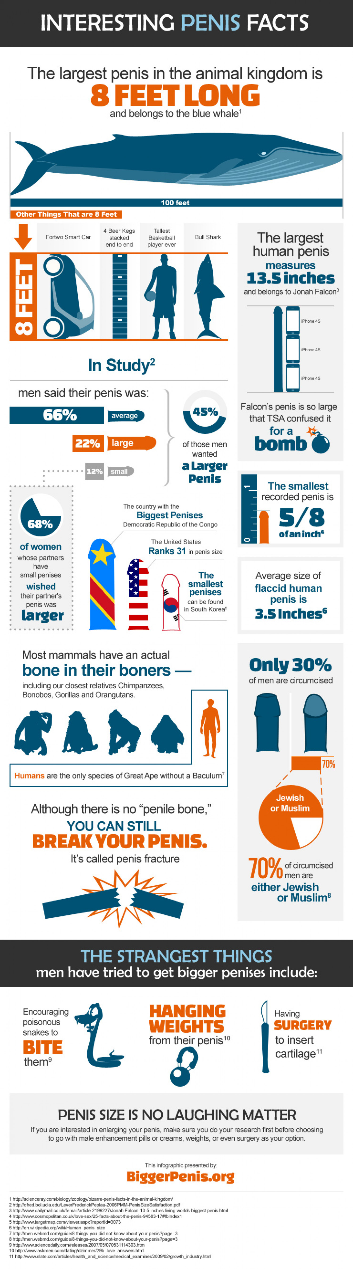 Interesting Penis Facts Infographic