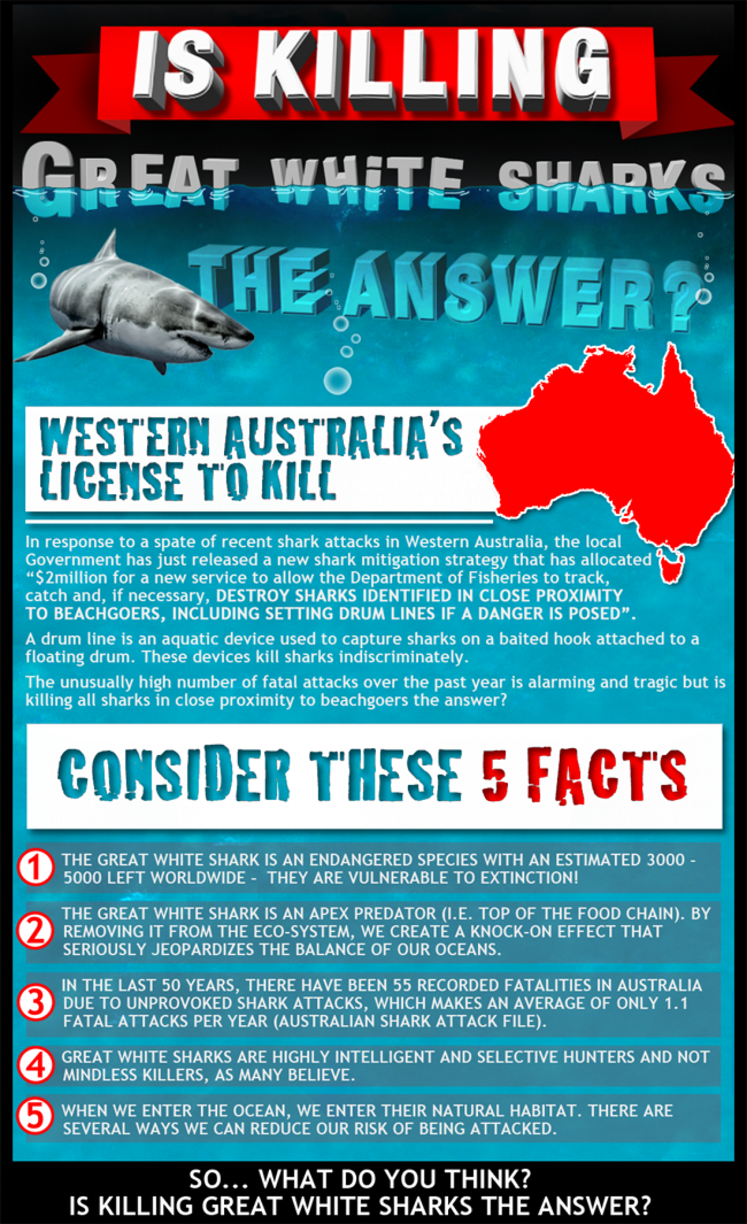 Is Killing Great White Sharks the Answer? Infographic