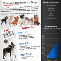 Joint Pain and Other Diseases in Small Dog Breeds Infographic
