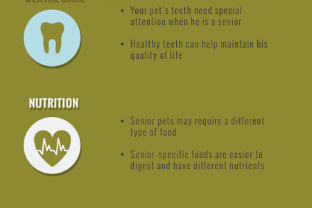 Keeping Your Senior Pet Healthy and Happy Infographic