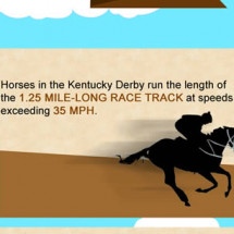 Kentucky Derby Betting Infographic