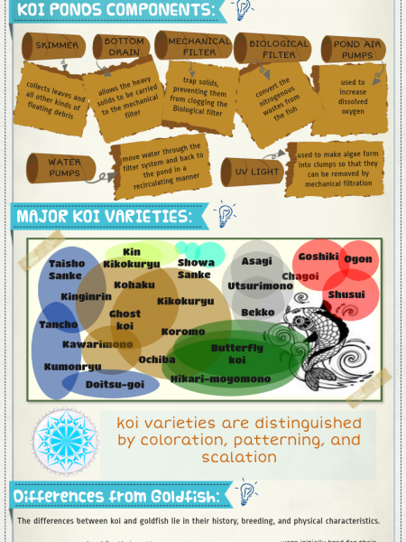 Koi and Koi Ponds Infographic