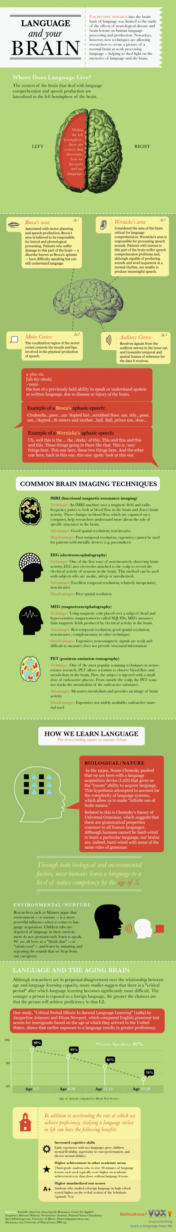 Language and Your Brain Infographic