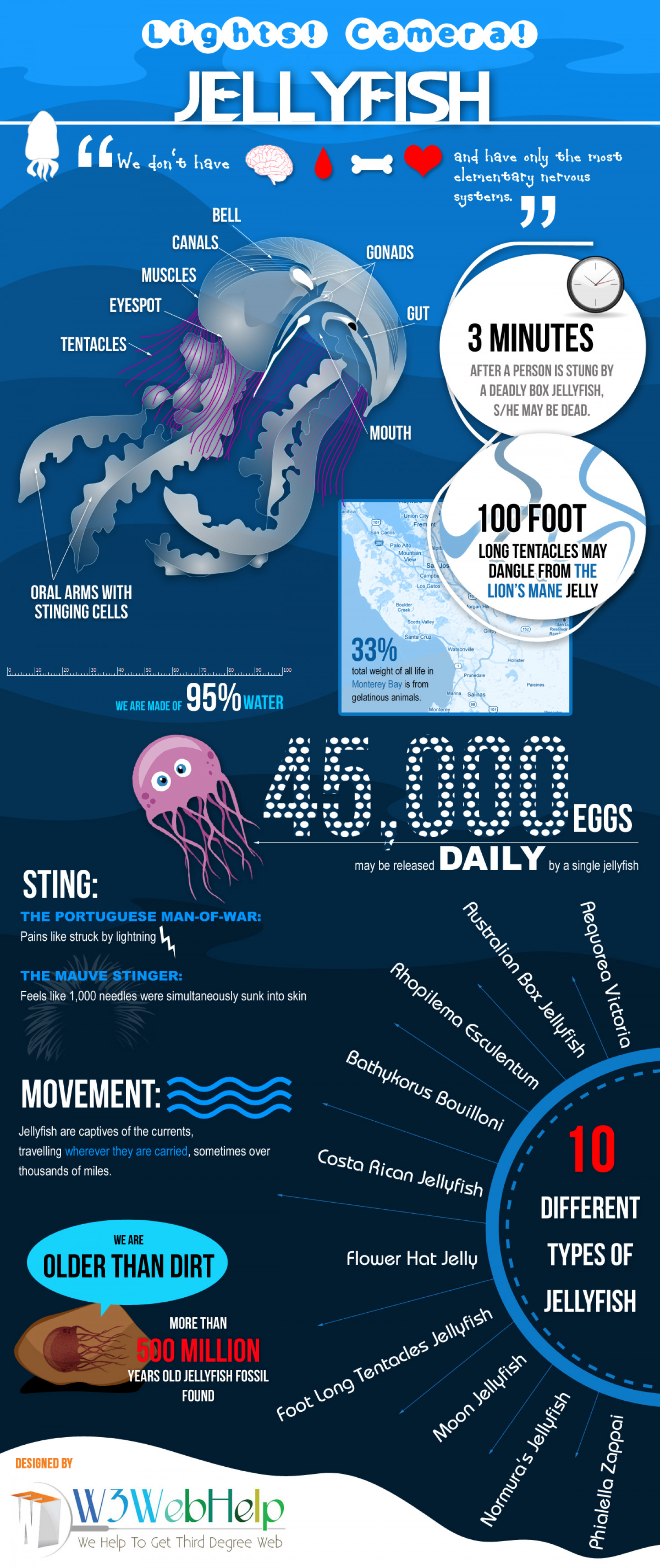 LIGHTS! CAMERA! JELLYFISH! Infographic