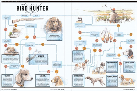 Looking for a Bird Dog? Infographic