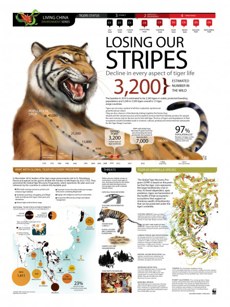 Losing Our Stripes: World Tiger Status Infographic