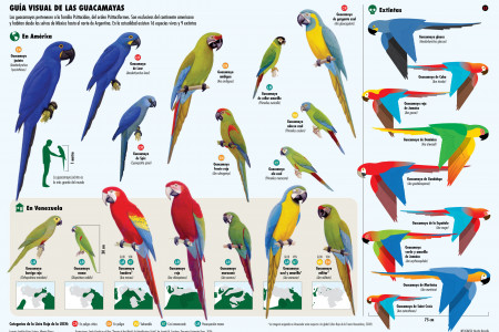 Macaws of the World Infographic