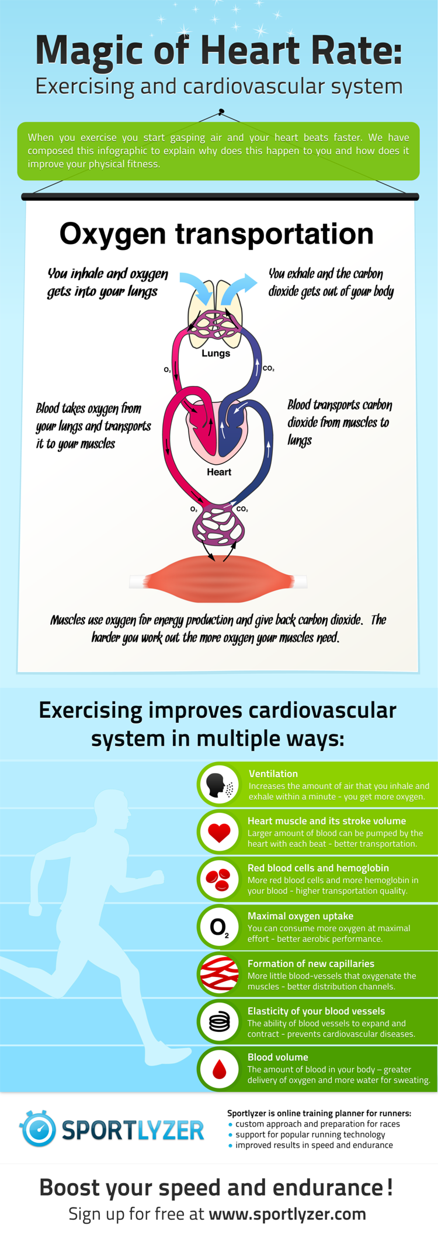 Magic of Heart Rate: Exercising and cardiovascular system Infographic