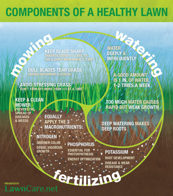 Maintaining a Lawn Infographic