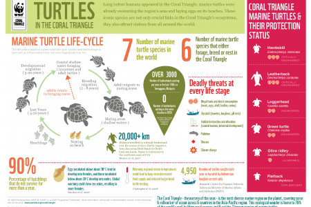 Marine Turtles in the Coral Triangle Infographic