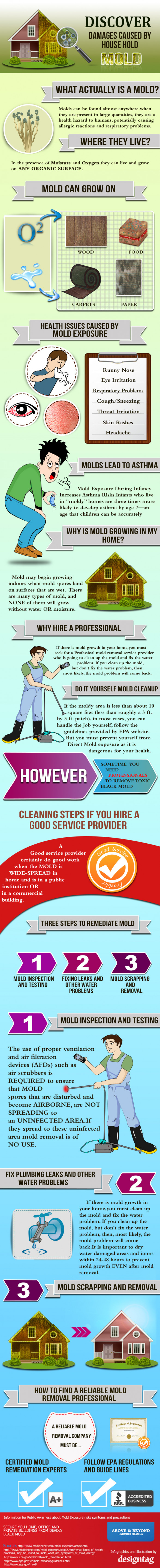 Mold removal infographics