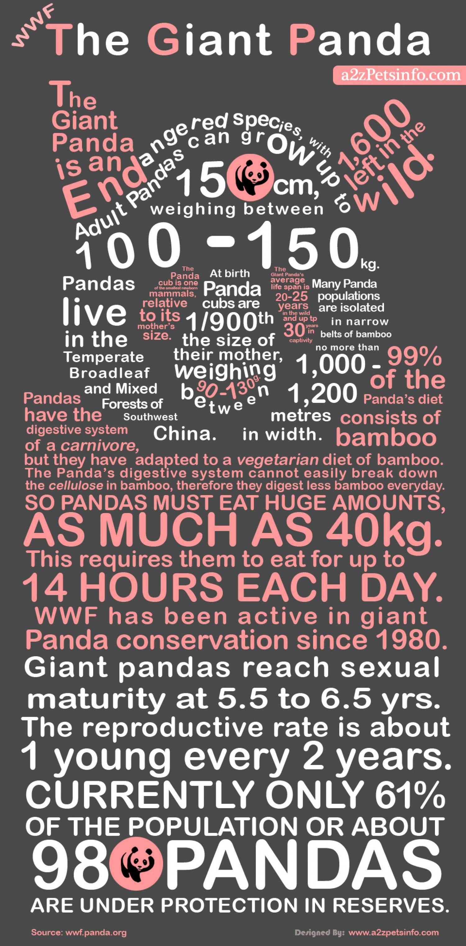 Most Interesting Things About Giant Panda Infographic