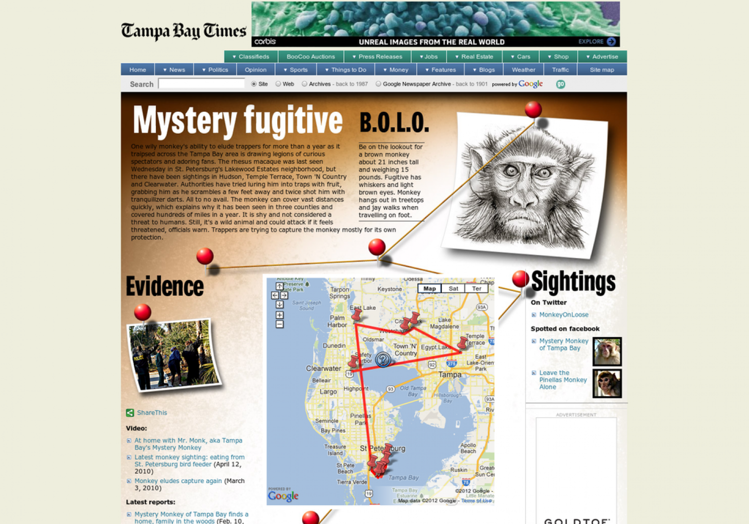 Mystery Monkey of Tampa Bay Infographic