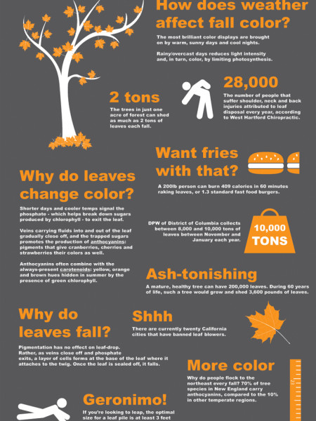 MyWeather.com's Raking in the Facts on Fall Infographic