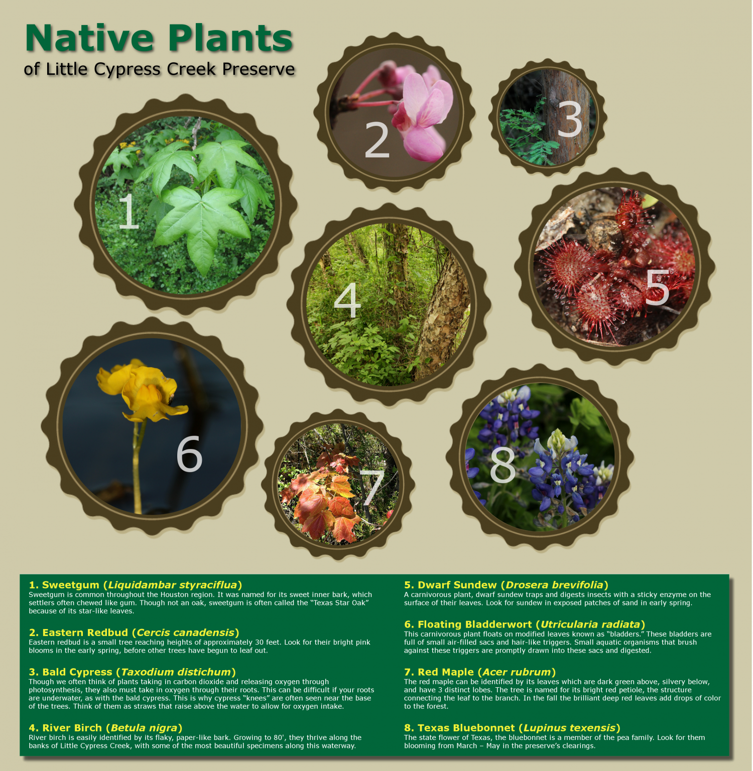 Native Plants of Little Cypress Creek Preserve Infographic