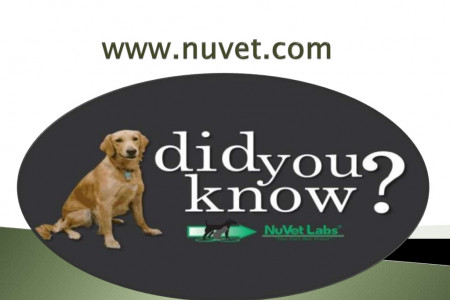 NuVet Labs 5 Ways to live on A Budget With a Dog Infographic