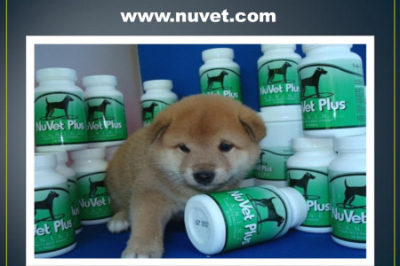 NuVet Plus | Human Foods That Dogs Should Never Eat Infographic