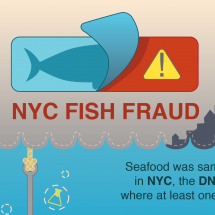 NYC Fish Fraud Infographic