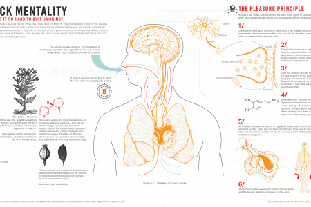 Pack Mentality: Why Is It So Hard to Quit Smoking? Infographic