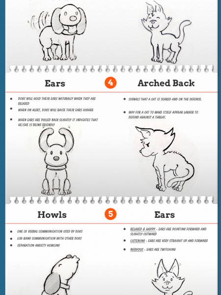 Pet Communication Infographic Infographic