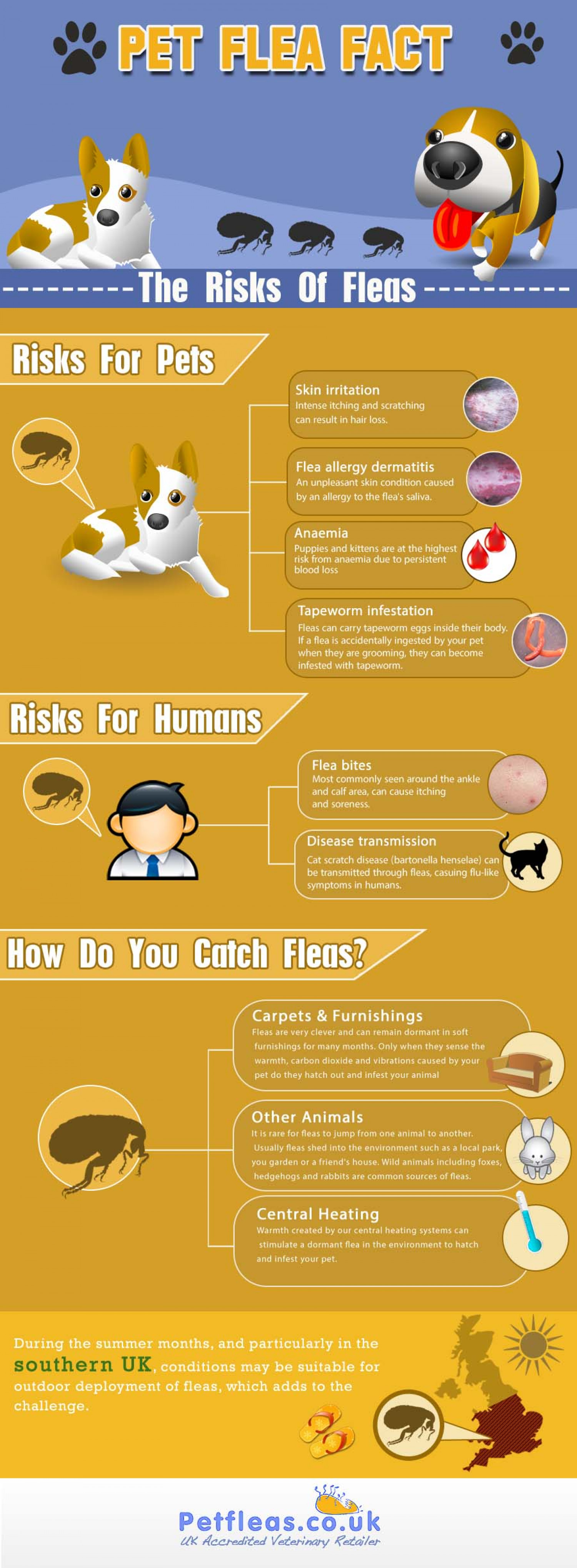 Pet Flea Fact File – The Risks of Fleas Infographic