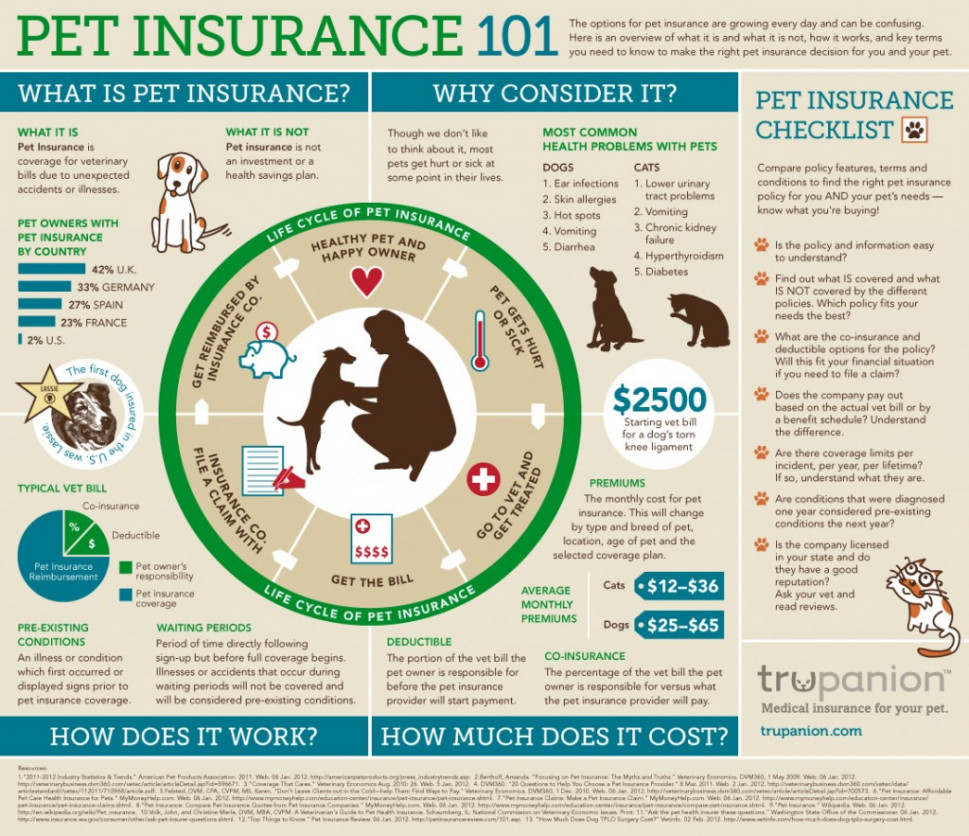 Pet Insurance 101 Infographic