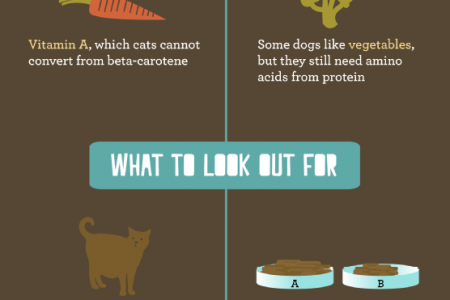 Pet Nutrition 101 Infographic