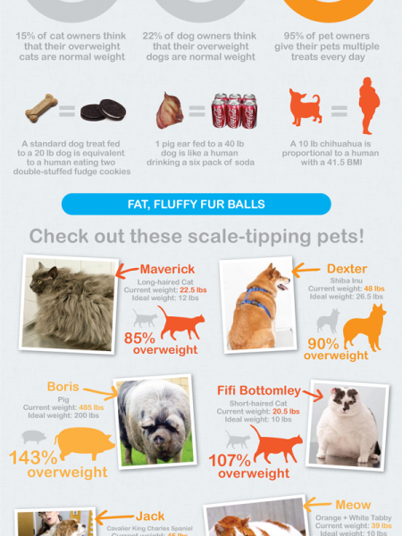 Pet Obesity is getting Obesely Ridiculous! Infographic
