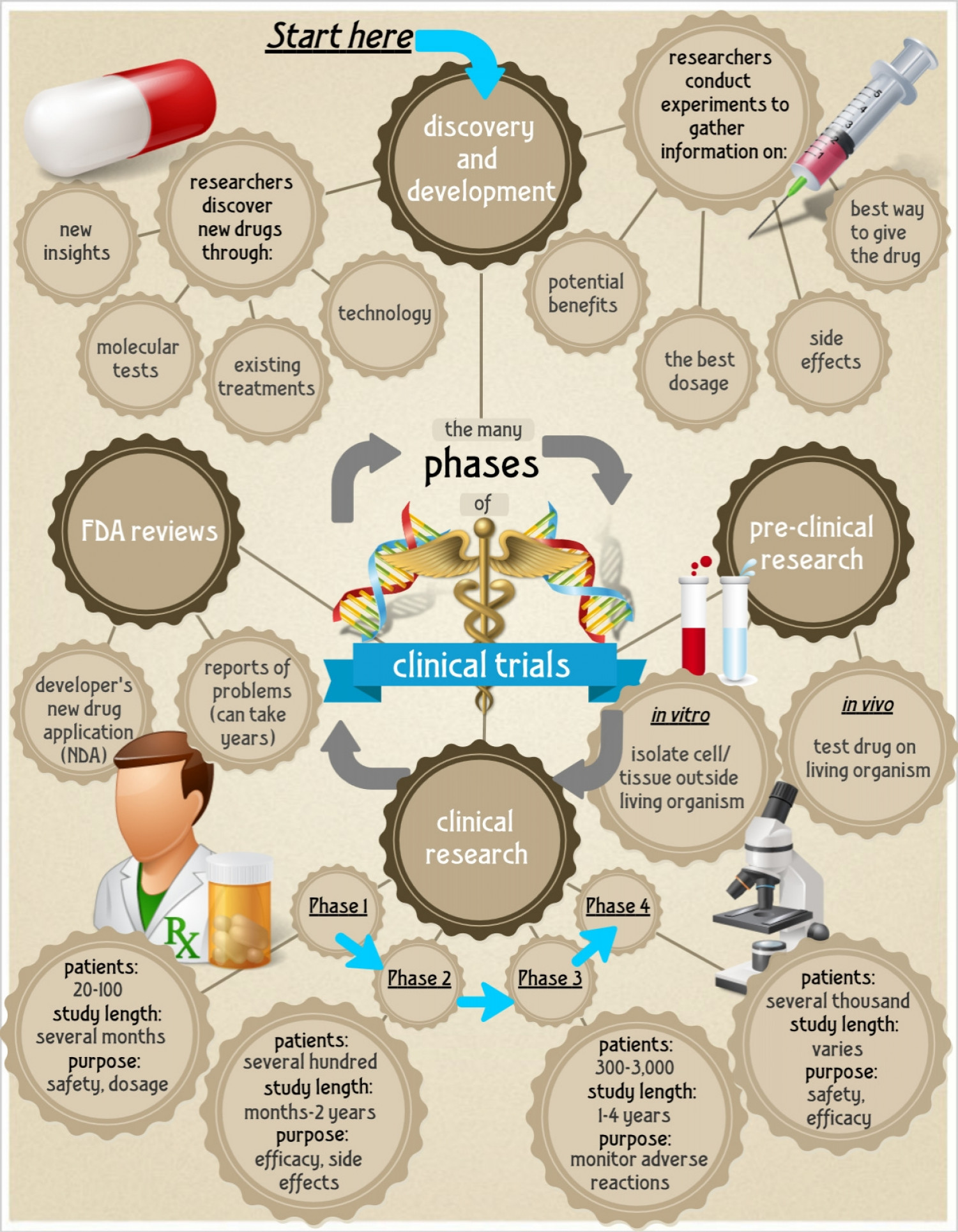 Phases of Clinical Trials  Infographic