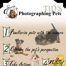 Photographing Pets Tips Infographic